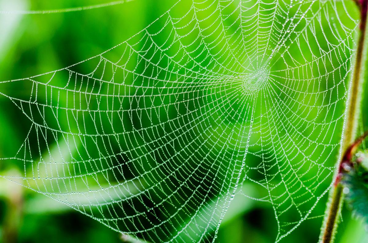 Vang je klant in een spinnenweb van content