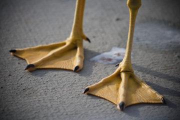Marketing van kop tot teen – echte stappen zetten met end-to-end marketing